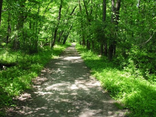Forest Preserve Trail Picture