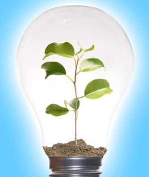 Lightbulb with a plant inside courtesy of Elephant journal